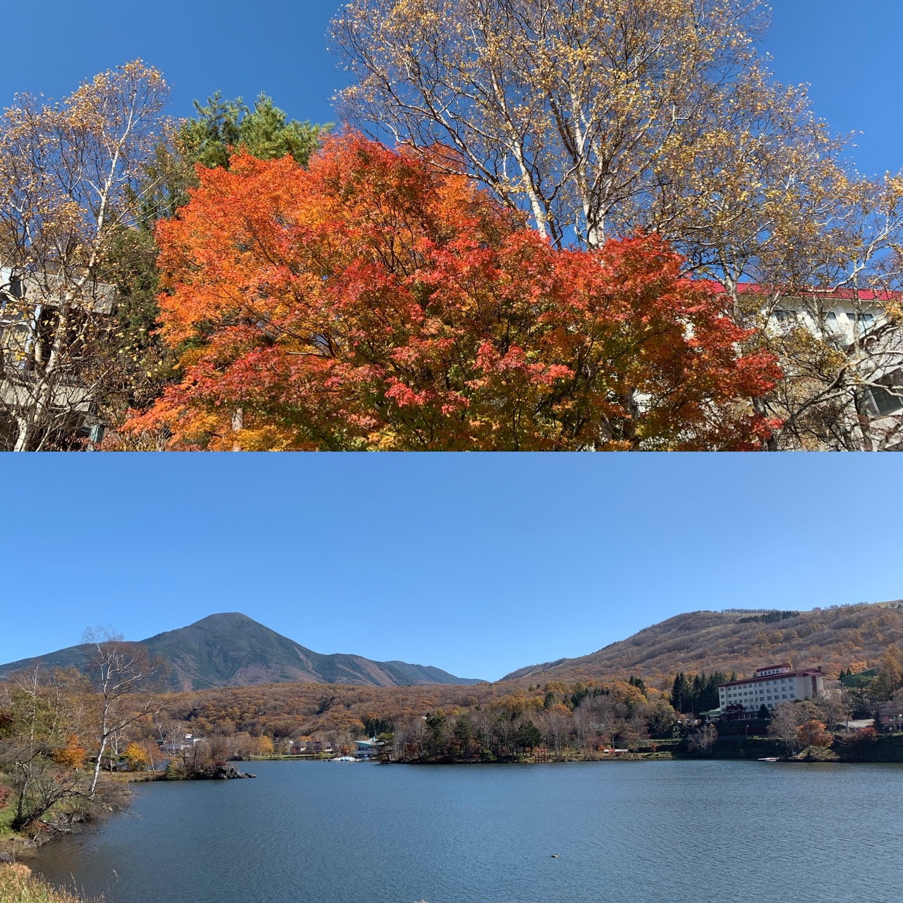 白樺湖の紅葉