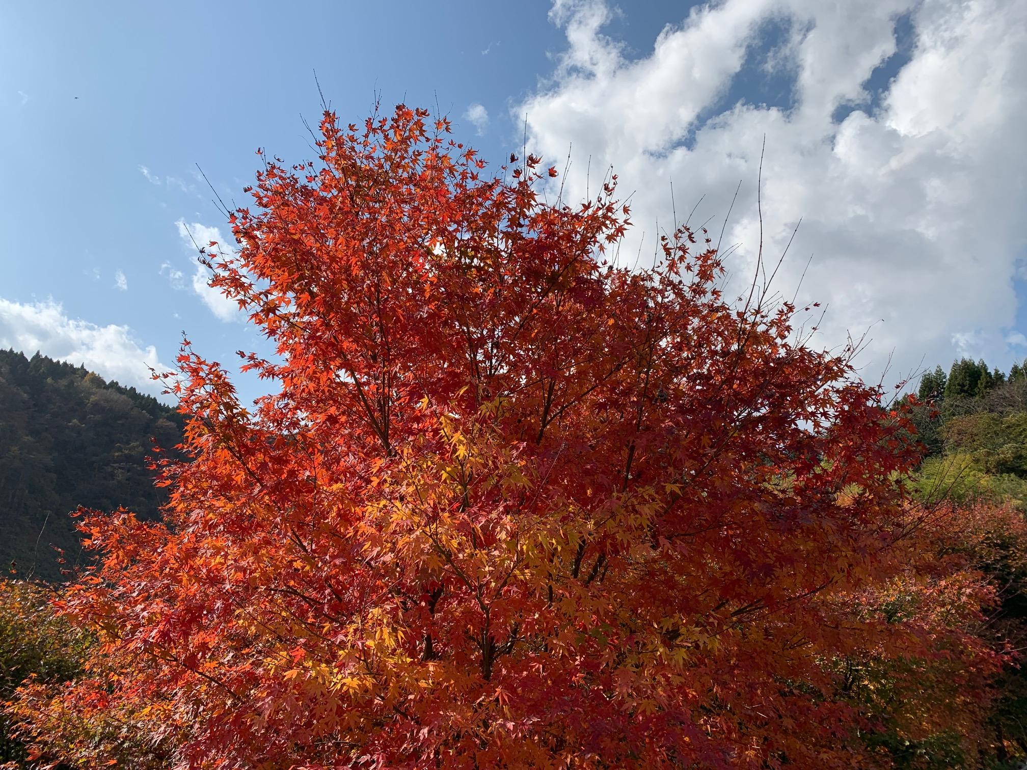 三瓶山の紅葉と当店からの夕焼け